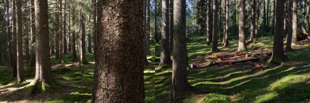Foto av Solbergskogen
